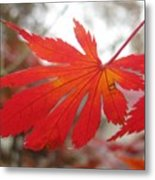 Japanese Maple Leaf 1 Metal Print