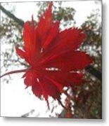 Japanese Maple Leaf 2 Metal Print