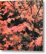 Japanese Maple - Nature Art Metal Print