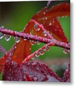 Japanese Maple On A Rainy Day Metal Print