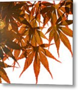 Japanese Maple Metal Print
