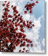 Japanese Maple Red Lace - Vertical Up Right Metal Print