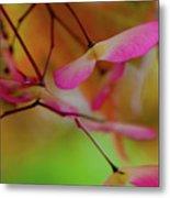 Japanese Maple Seedlings Metal Print