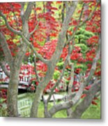 Japanese Maple Tree And Pond Metal Print