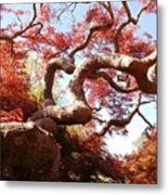 Japanese Maple Tree In Spring Metal Print