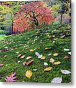 Japanese Maple Tree On A Mossy Slope Metal Print