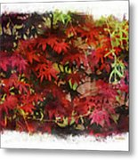 Japanese Maple Under The Willow Metal Print