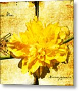 Japanese Rose  Metal Print
