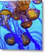 Japanese Sea Nettles Metal Print