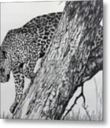 Jaquar In Tree Metal Print