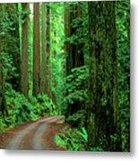 Jedediah Smith Redwoods                            Metal Print