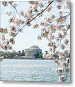 Jefferson Memorial Blossoms Metal Print