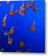 Jelly Fish 1 Metal Print