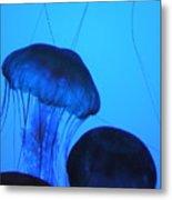 Jelly Fish Metal Print