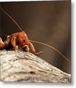 Jerusalem Cricket On Textured Log Metal Print