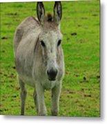 Jerusalem Donkey On A Farm Metal Print
