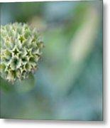 Jerusalem Sage Seed Head Metal Print