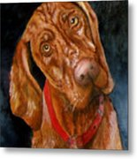 Jesse The Vizsla Metal Print