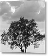 Jetty Tree Metal Print