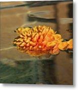 Jewel Drops - Orange Chrysanthemum Bloom Floating In A Fountain Metal Print