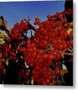 Jewels Of Autumn 4 Metal Print