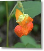 Jewelweed Metal Print