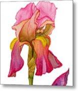 Jody's Iris Metal Print