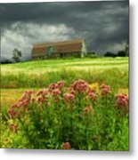 Joe Pye Weed And Barn Metal Print