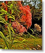Joe-pye-weed Near Schroon River In New York Metal Print
