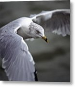 Johnathan Livingston Seagull Metal Print