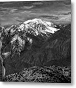 Joshua Tree At Keys View In Black And White Metal Print