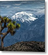 Joshua Tree At Keys View In Joshua Park National Park Metal Print
