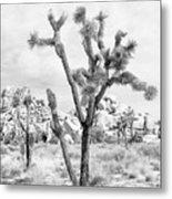 Joshua Tree Branches Metal Print