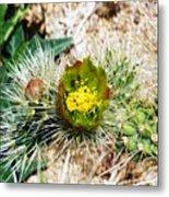 Joshua Tree Cactus Bloom II Metal Print