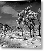 Joshua Trees In Snow Metal Print