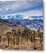 Joshua Tree National Park 2 Metal Print