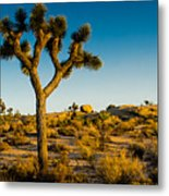 Joshua Tree Panoramic Metal Print