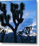 Joshua Tree Sunset Skies Metal Print