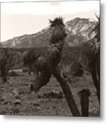 Joshua With Snow Capped Mountain Metal Print