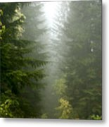 Journey Through The Fog Metal Print