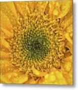 Joyful Color Nature Photograph Metal Print