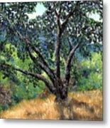 Juan Bautista De Anza Trail Oak Metal Print