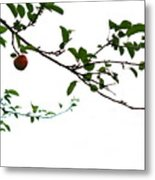 Juicy   A Tempting Photograph Of A Tasty Ripe Red Apple On A Tree  Metal Print