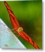 Julia Heliconian Butterfly Spreading Its Wings In Iguazu Falls National Park-brazil  Metal Print