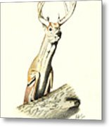 Jumping Buck Metal Print