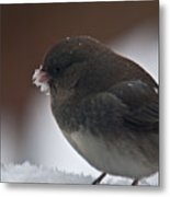 Junco In Snow Metal Print