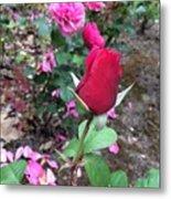 June Rose #2 Metal Print