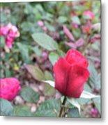 June Rose #4 Metal Print