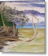 Jungle Gym Mangrove Tree Metal Print