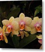 Jungle Orchids Metal Print